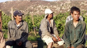Grape_workers