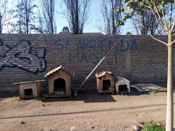 """Talagante: de la alta honra de ser un """"Pueblo de indios"""" a un infame """"SE ARRIENDA… MASISI"""" escrito en sus muros y sobre casetas para perros"""